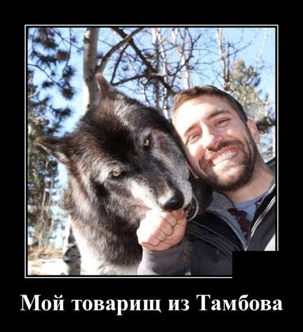 Демотиваторы про волка
