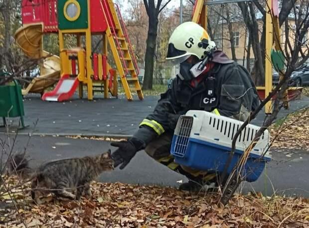В районе Люблино кошку вытащили из вентиляции