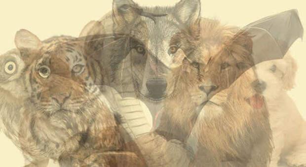 Животное, которое Вы увидите первым, расскажет кто Вы есть на самом деле.