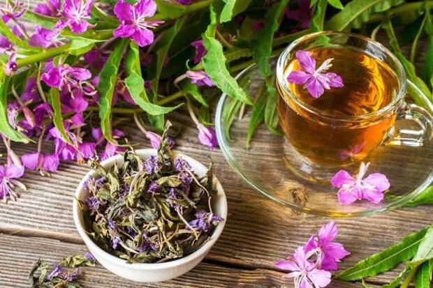 Лаванда - отличный антисептик. Какую пользу несут разные виды травяного чая