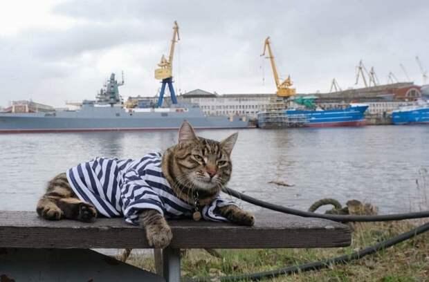 Пользователи выбрали лучших котов России. Животные из музеев, театров и компаний Петербурга заняли 29 из 57 мест — показываем победителей