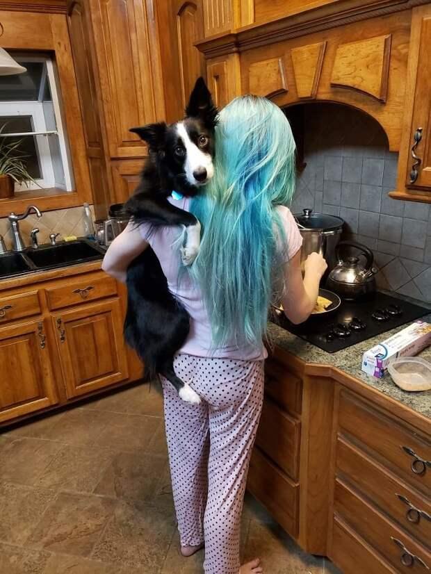 Фотографии любимых собак