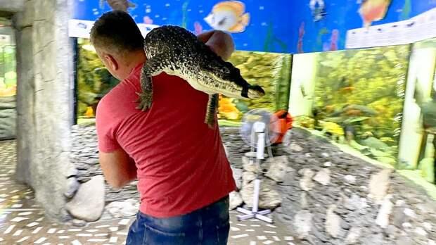 Как крокодилов спасали от потопа в Ялте?
