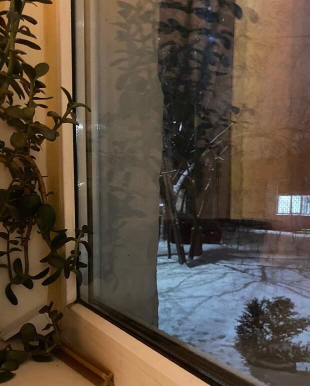 Бездомная овчарка пугала людей, стучась в окна. Оказалось, бедняга искала место, где можно погреться