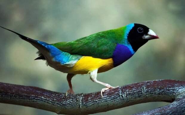 Вот 10 самых красивых птиц планеты, о которых вы, скорее всего, даже не слышали!