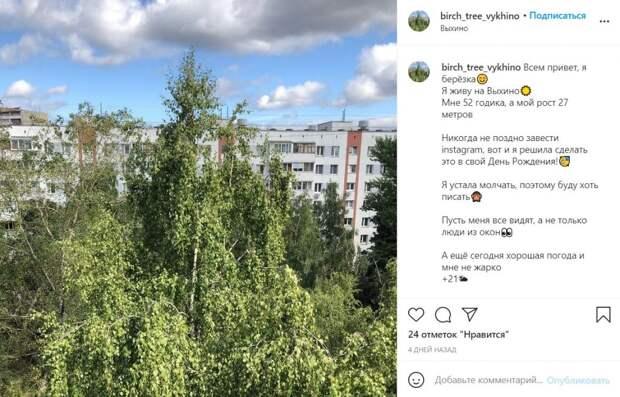 У березы из Выхина-Жулебина появилась своя страничка в Инстаграм