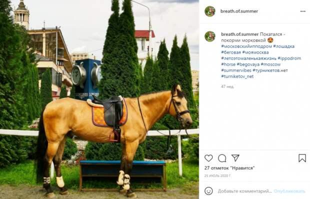 Фото дня: конь у ипподрома ждет гостей