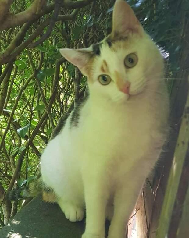 Каждый день кот часами таращится в окно парня. Там живёт МУРлыка, в которую он безответно влюблён