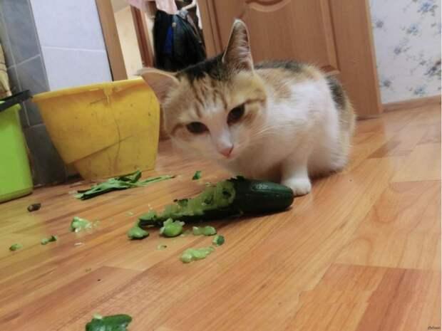 Истории кошколюбам от кошатников со стажем
