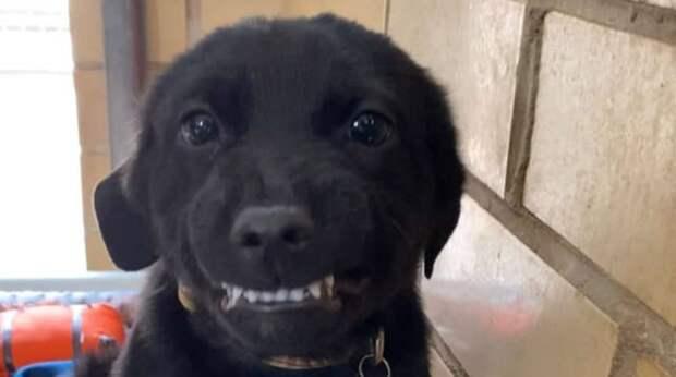 """""""Я хороший?"""" – щенок улыбается, слыша ласковый голос человека. Вот только дома у него по-прежнему нет"""
