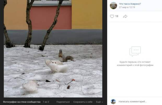 Фото дня: пушистый «ученик» школы на Клинской