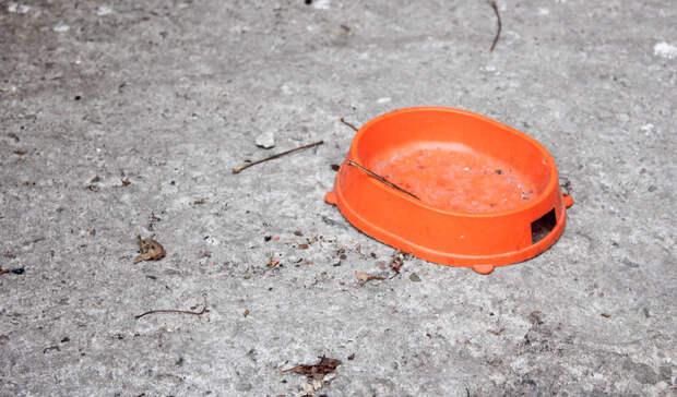 «Устала видеть трупы надорогах»: Казанцы призывают помогать сбитым животным