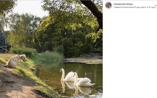Фото дня: в Ботаническом саду пес познакомился с лебедями