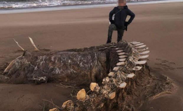На пляже Шотландии нашли существо, напоминающее Лох-Несского монстра: к месту выехали специалисты