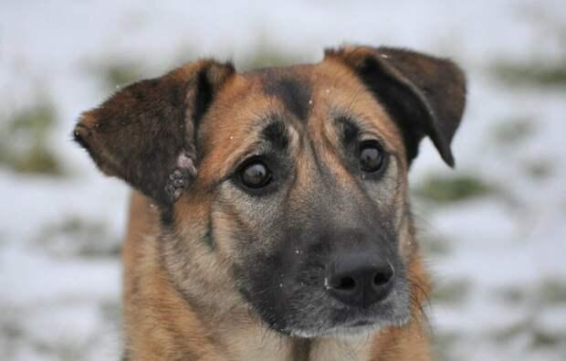 Трезорка - собака, спасшая от голода целый дом