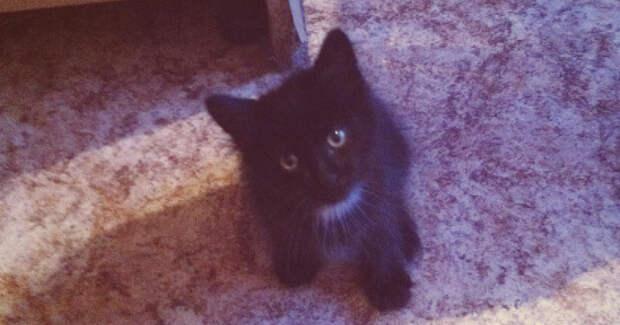 Пушистый хвост развевался по ветру… Котёнок уверенно топал по улице навстречу Судьбе!