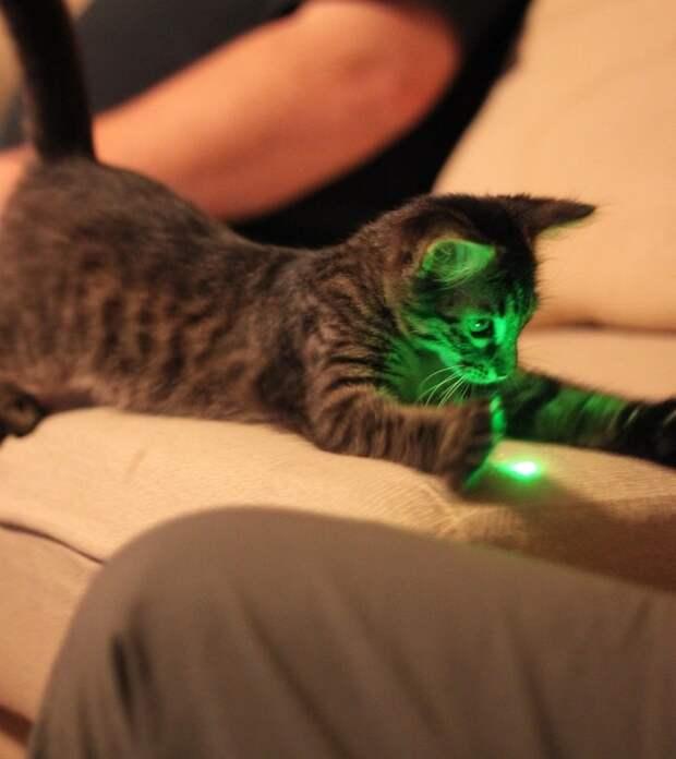 Факты о характере и поведении кошек, которые рассказала зоопсихолог