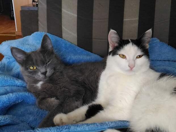 Серый пушистый котенок на крыльце бегает и орет - аж сердце разрывается!