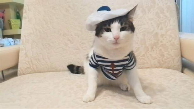 Русские приколы с котами за конец ноября