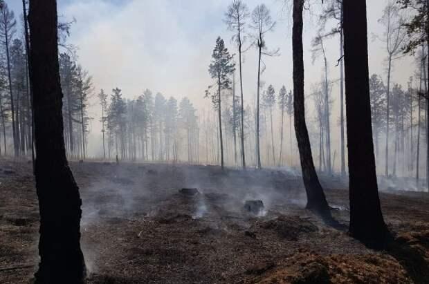В Тюменской области потушили почти все лесные пожары