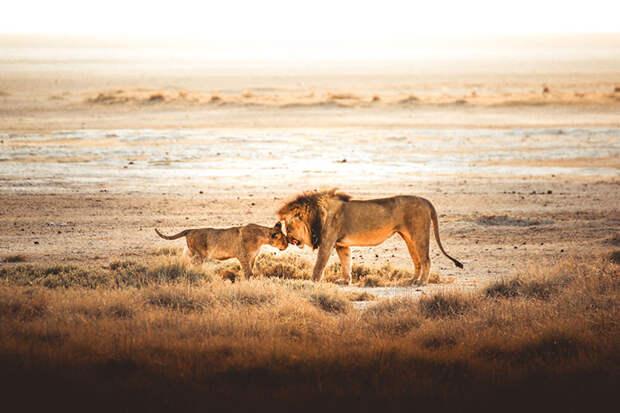 Парк Этоша, Намибия.