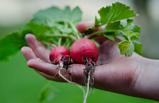 Что посадить под зиму? 17 культур для подзимних посевов