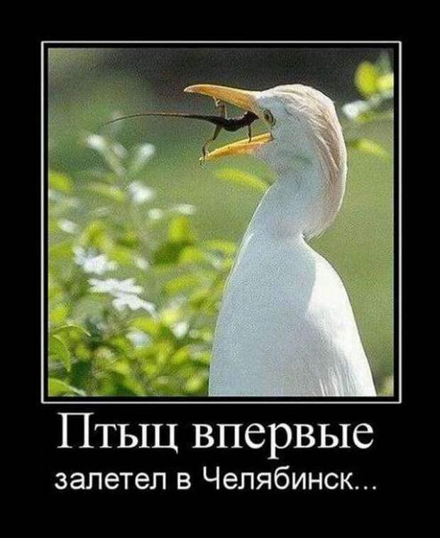 Птица впервые залетела в Челябинск...