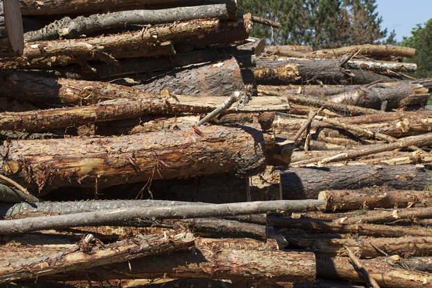 Путина возмутила медлительность в борьбе с теневым экспортом леса