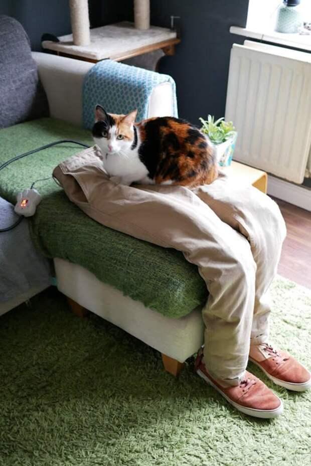 Кошка слишком любила лежать на ручках, отвлекая хозяев от работы. И на выручку пришли искуственные коленки!