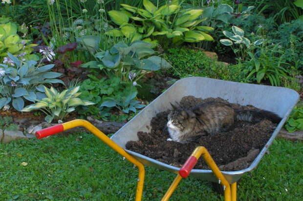 Работы в саду должны быть под контролем кота