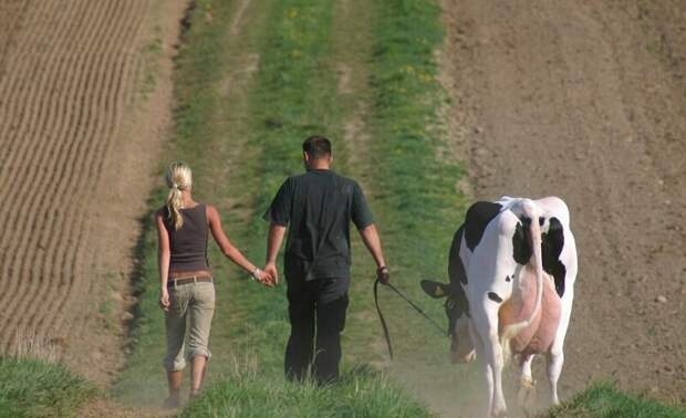 20. The END! деревня, коровы, люди, прикол, провинция, село, трешак, юмор