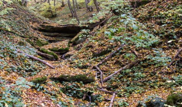 Мальчики 12 и15 лет ушли гулять в лес ипотерялись под Полевским