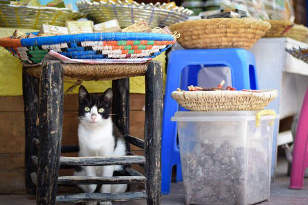С широко открытыми глазами Эс-Сувейра, город, животные, кот, марокко, проект, фотограф