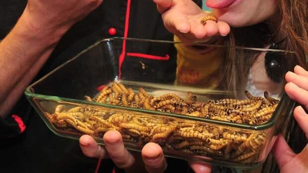 В бургеры добавят червей и сверчков: Раскройте глаза и... вперёд!