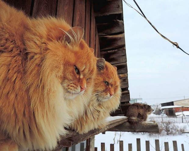 koshki foto Ally Lebedevoy 4