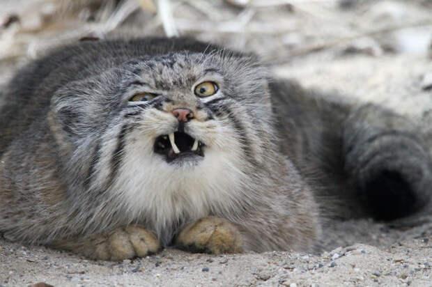 Ржачные фото нефотогеничных животных, поднимающие настроение