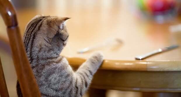 Блог Павла Аксенова. Анекдоты от Пафнутия. Фото Andrey_Kuzmin - Depositphotos