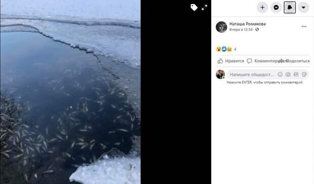 Рыба в Лефортовских прудах страдает от нехватки кислорода