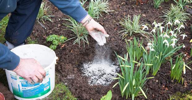 зола для почвы