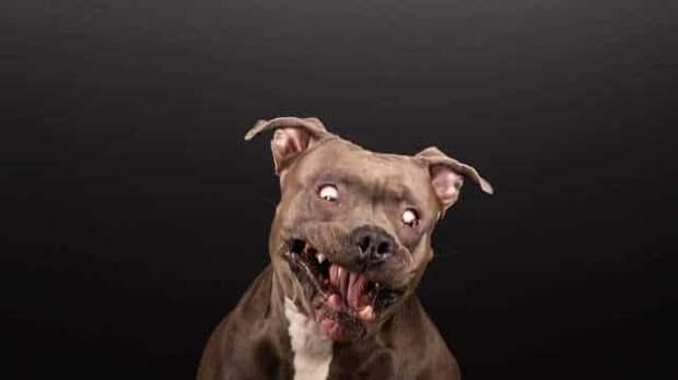Семья не захотела расставаться со спасённой собакой, ведь такую питомицу ещё поискать надо!