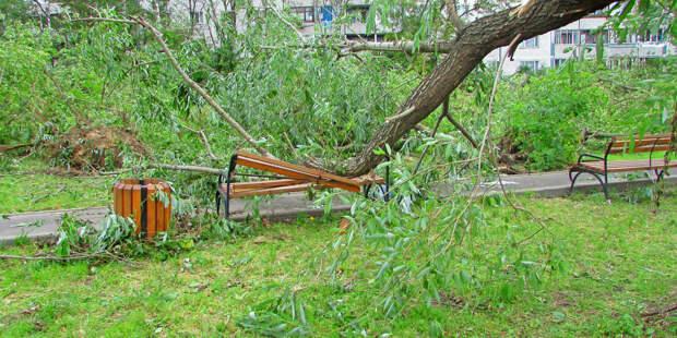 Шесть человек получили травмы из-за грозы и ветра в Москве