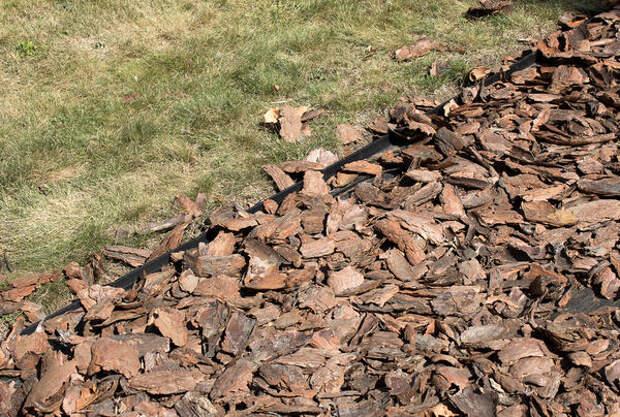 Декоративная органическая отсыпка из коры дерева на газоне