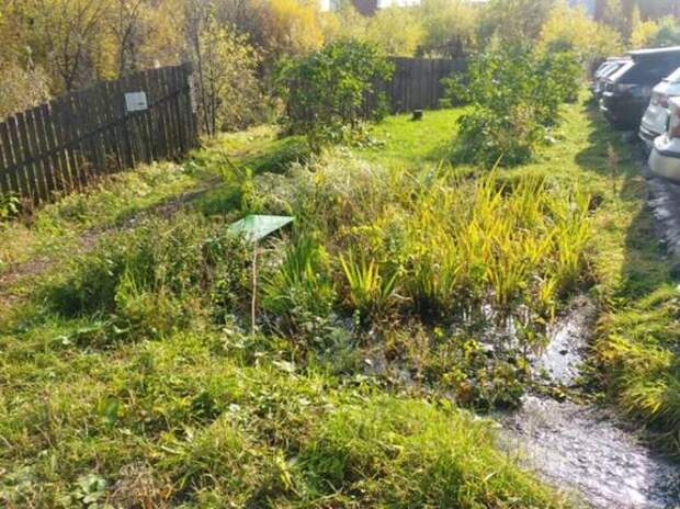 В Перми создали дождевые сады