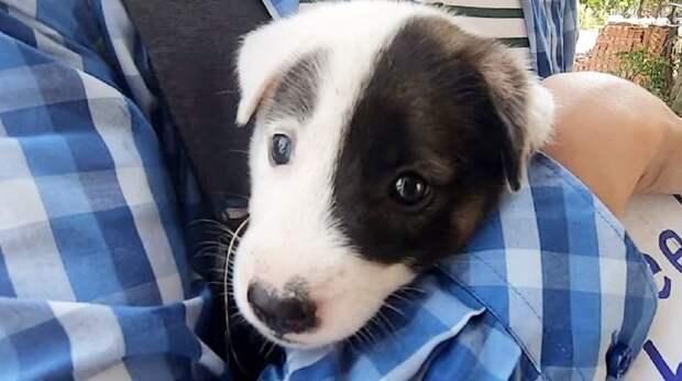 На улице топтался щенок, а на его шейке была табличка с какой-то надписью