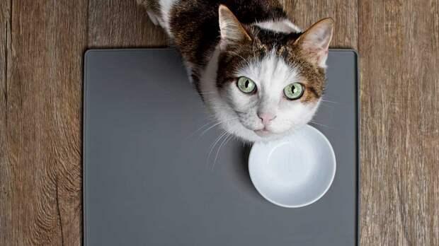 Названы смертельно опасные для кошек продукты