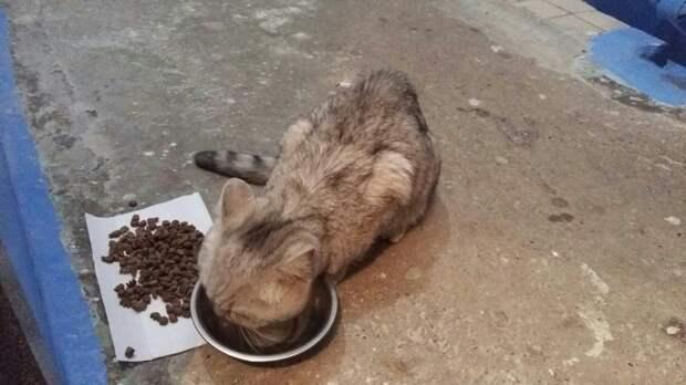 На улице сидел измученный тощий кот. Девушка забрала его в дом, но тот отказывался есть и пить…