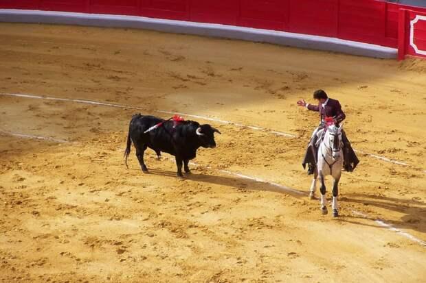 В испанском городе из-за кличек быков запретили корриду
