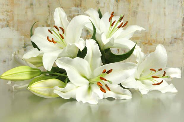 Три ветки белых лилии и чемоданчик.