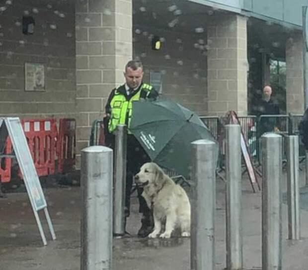 Охранник укрыл чужого пса зонтом. Этим поступком он растрогал соцсети