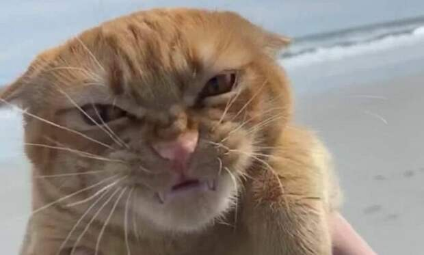 Как обычный рыжий кот Тыква, который корчит гримасы ветру, стал интернет-мемом